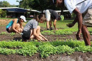 farming in jacksonville, FL