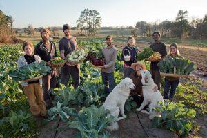 farming in Florida