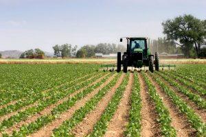 florida farming