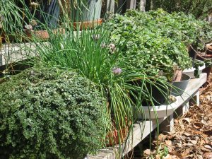 Florida Herbs