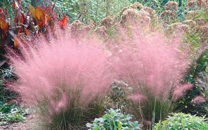 Florida Ornamental Grasses