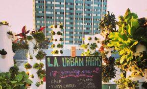 LA urban farm