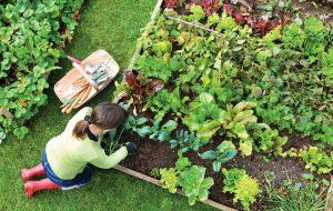 start an organic garden