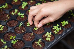 how to take care of seeds